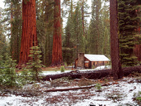 Cabin in Mariposa Grove